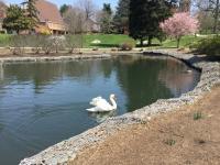 Millersville University campus lake is two blocks away